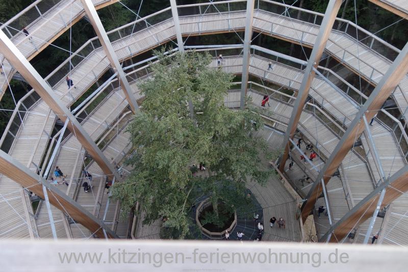 Baumwipfel Steigerwald Ebrach