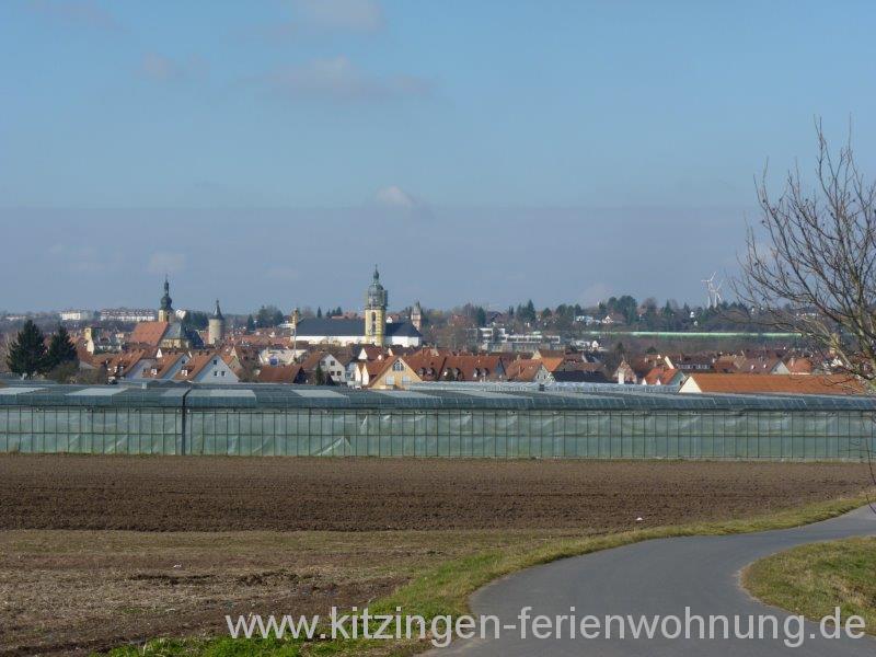 Biber Kitzingen (2).jpg